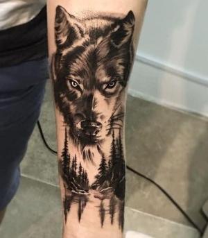 tatu de lobo